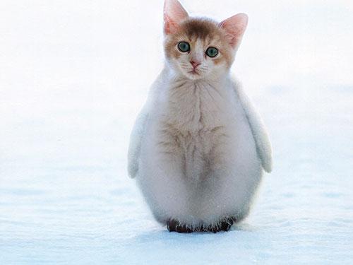 catpenguin