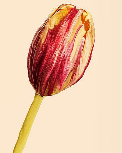 tulip-sx70-manipulation