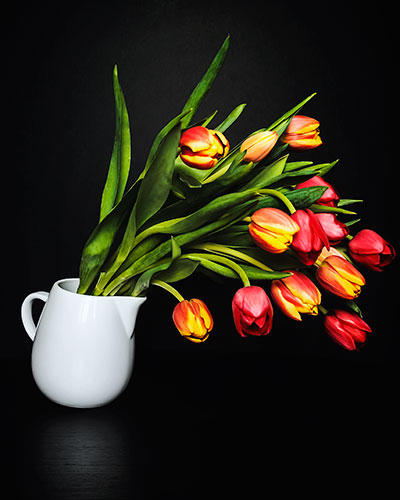 Tipping-Tulips