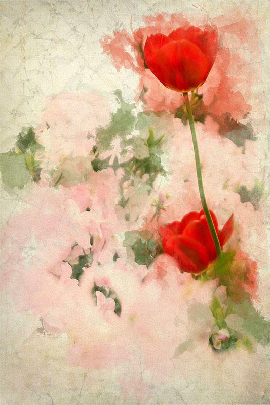 Blossom-and-red-flower-water-colour