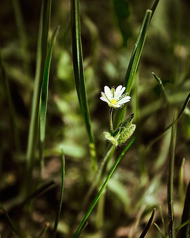 wild-flower-in-the-grass