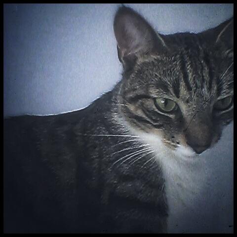 cat_1371459560154_1