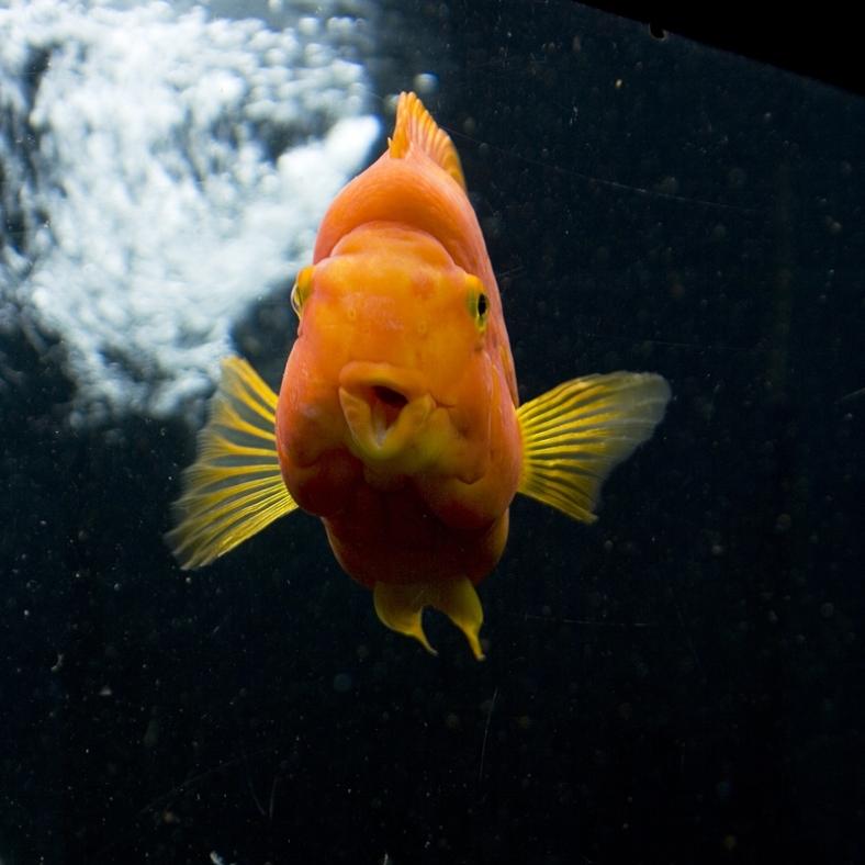 fugly-fish-2