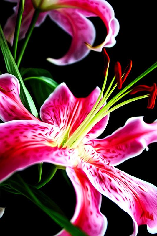 flower-oil
