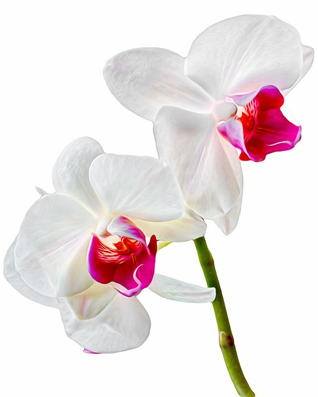 orchid-oil-sharp-colour