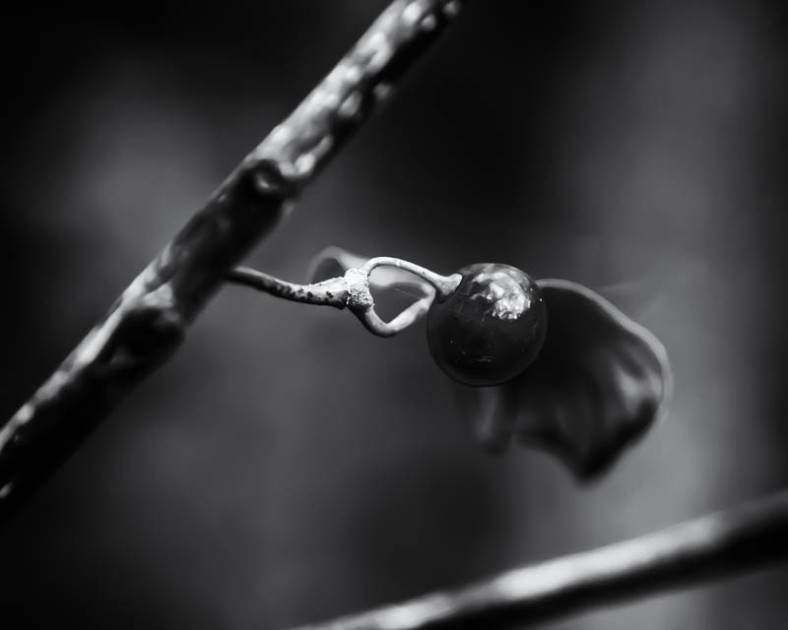 Black and White Berry