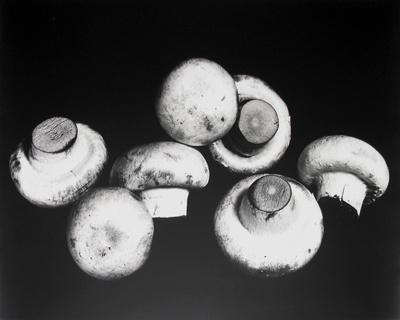 Still Life with Mushrooms New York