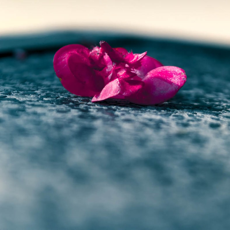 Split toned Flower on Stone Table