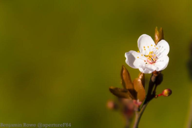 Blossom 0312