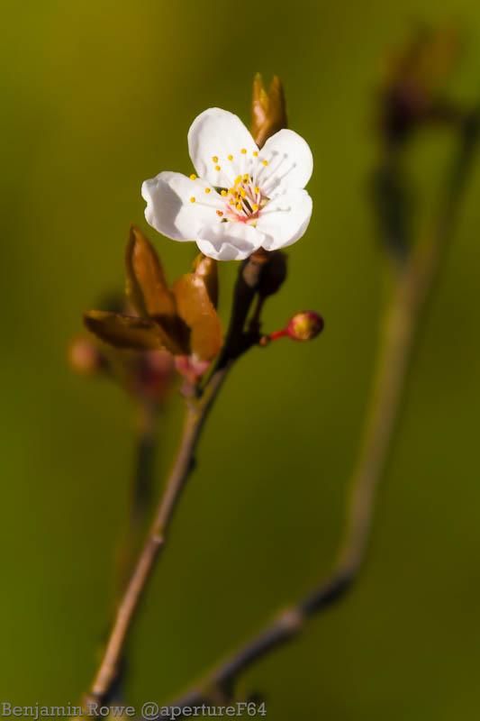 Blossom0320