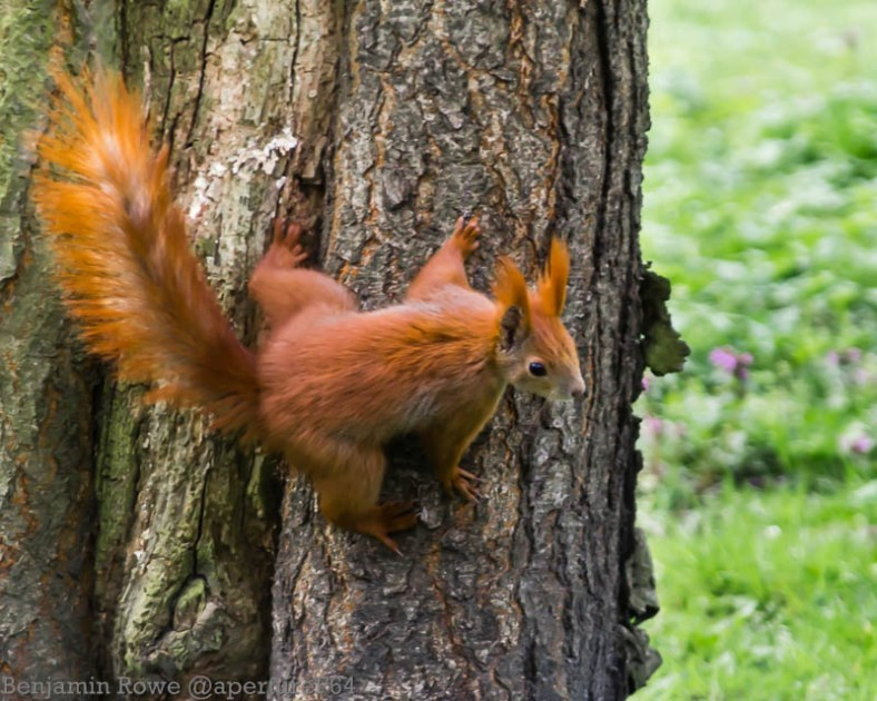 Return Of Secret Squirrel 1