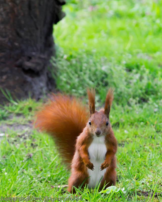 Return Of Secret Squirrel 2