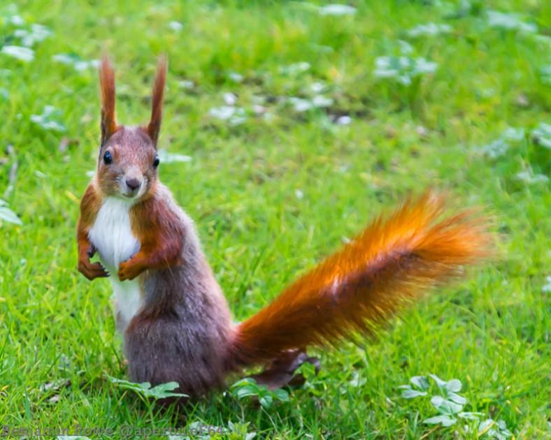 Return Of Secret Squirrel 3