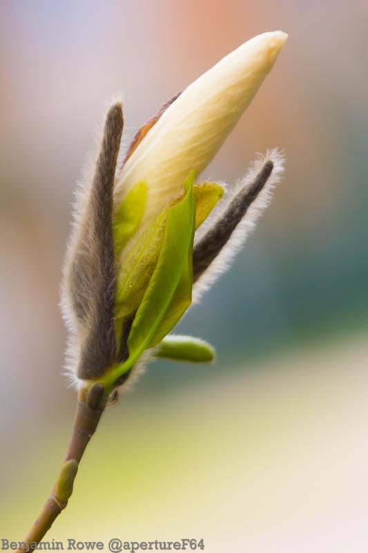 Unfurling Spring