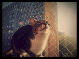 18.30 a bit late. End #1day12pics as I started. My cat hunting pigeons with a safty net. Made with #Pixlr