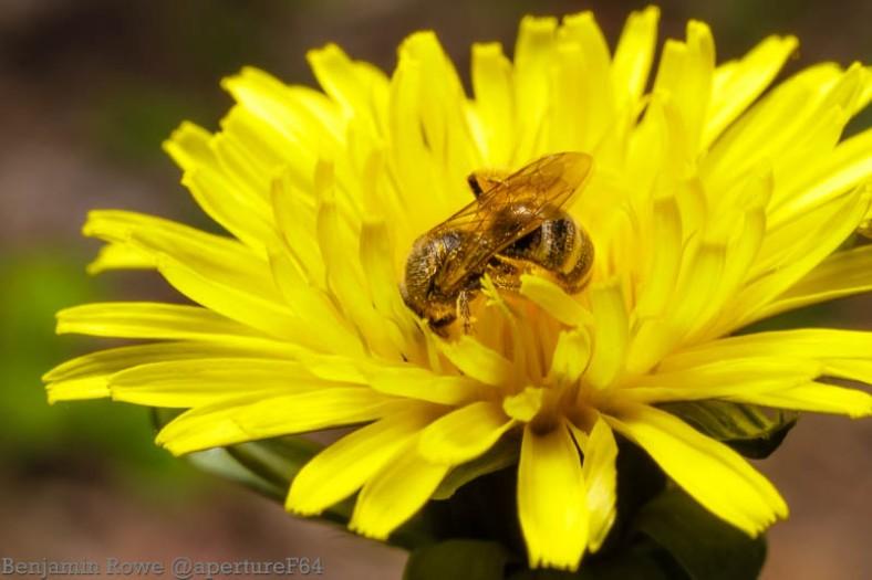 Bee Today Honey Tomorrow