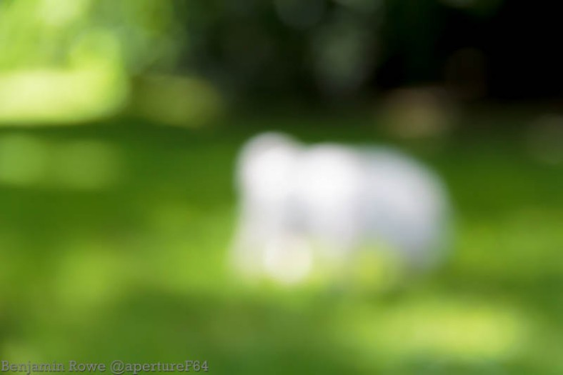 Bokeh doesnt create the image