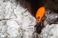 Fire Bugs 2014-1
