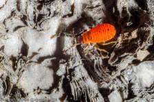 Fire Bugs 2014-4