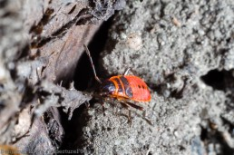 Fire Bugs 2014-5