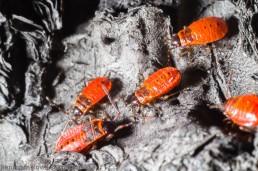 Fire Bugs 2014-6
