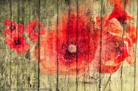 Phototangler poppies