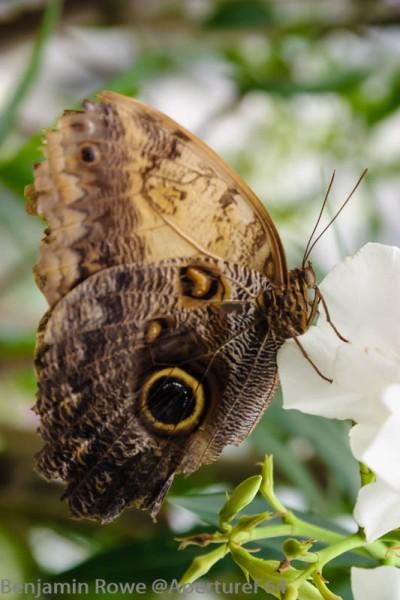 Butterfly Palmhouse 2
