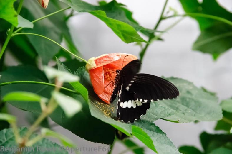 Butterfly Palmhouse
