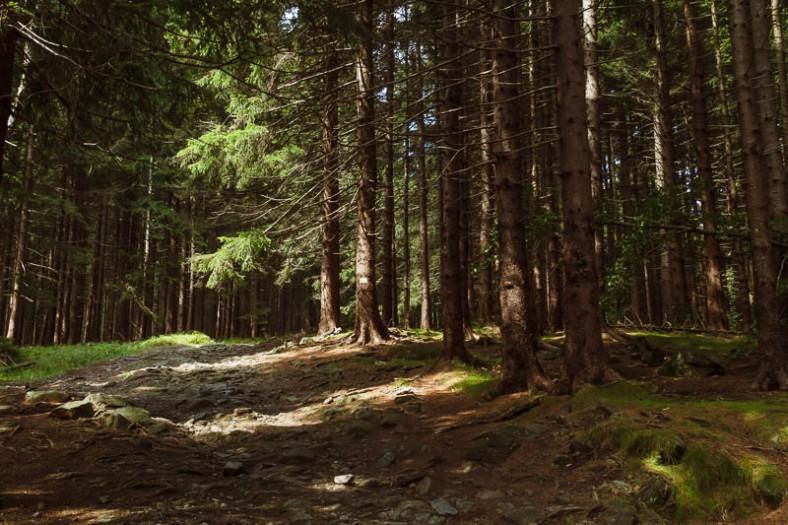 Hiking up a trail