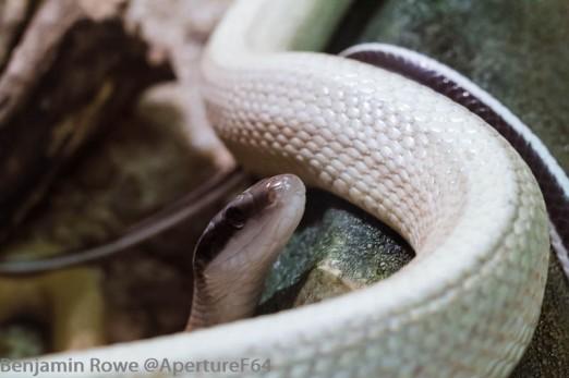 Lodz Zoo Snake-1