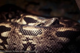 Lodz Zoo Snake-3