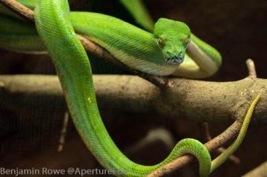 Lodz Zoo Snake-6