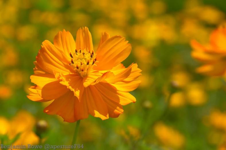 Sunbathing In Orange