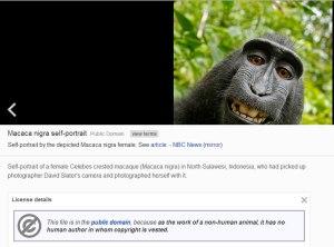 wiki-copyright-marcaca-monkey