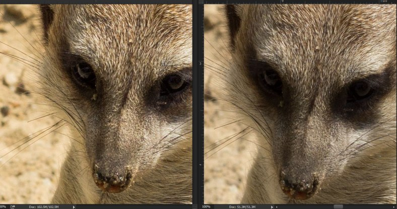 Left 16 bit raw image Right 8bit jpeg. The 16bit image has more definition in the shadows and stronger colours than its jpeg counterpart.Both zoomed in at 100%