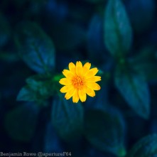 Close up Flower Yellow