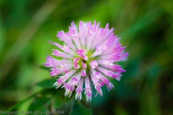 Macro Flower Purple