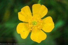 Macro FLower Yellow