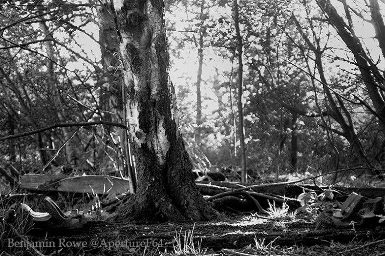 sleeper-woods-web