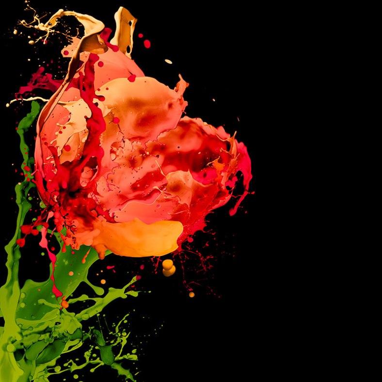 tulip-splash