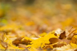 Autumn Leaves (2 of 5)