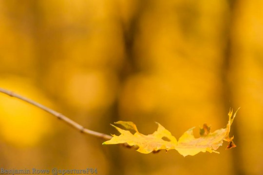 Autumn Leaves (4 of 5)