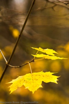 Autumn Leaves (5 of 5)