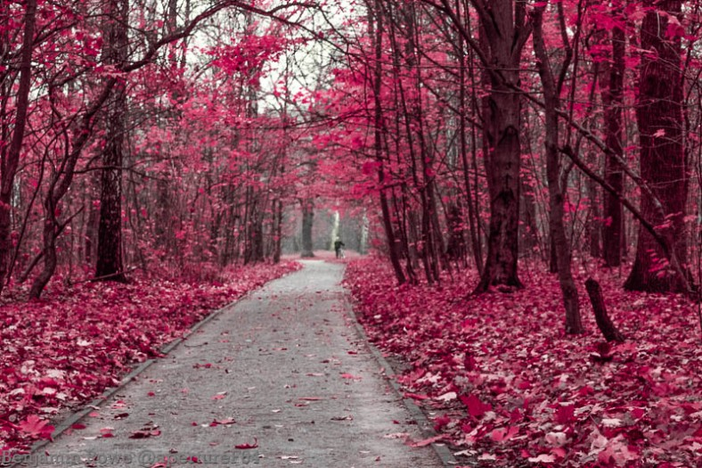 Infrared Autumn