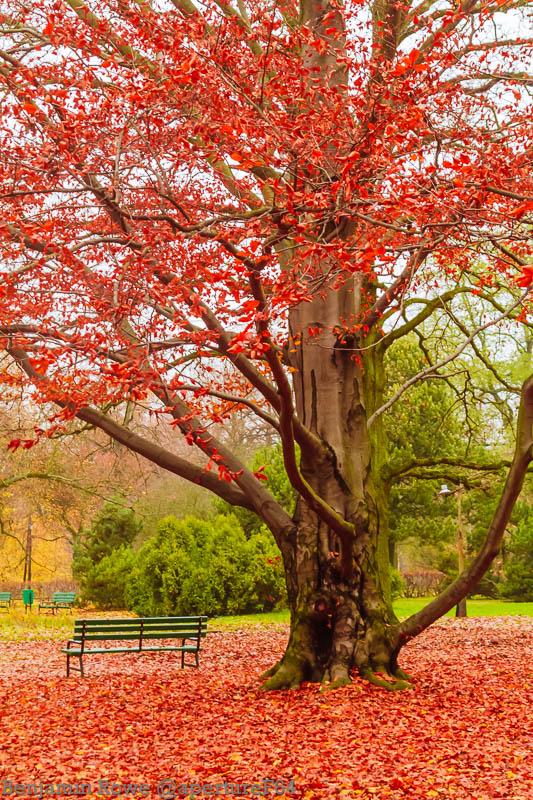 Red Tree Zdrowie Park