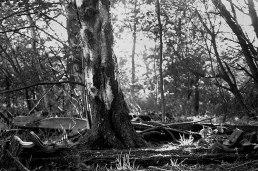 sleeper-woods