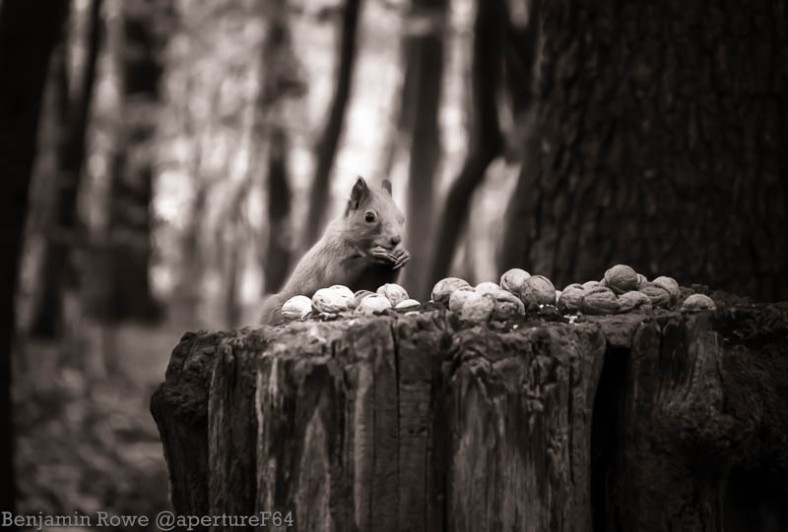 Squirrel Black and White Zdrowie