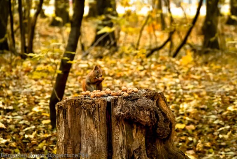 Squirrel Wide Zdrowie Park