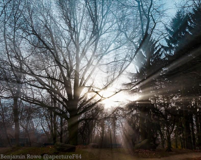 Light Shining Through Trees Zdrowie Park