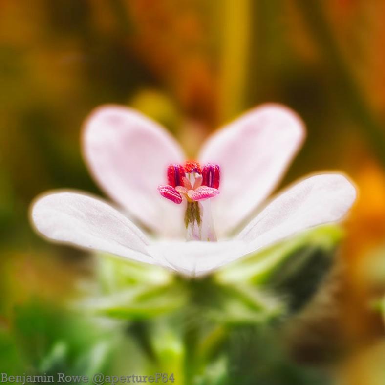 Wild Flower Macro-Edit3